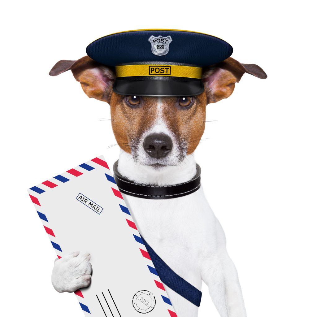 Direct Mail Dog